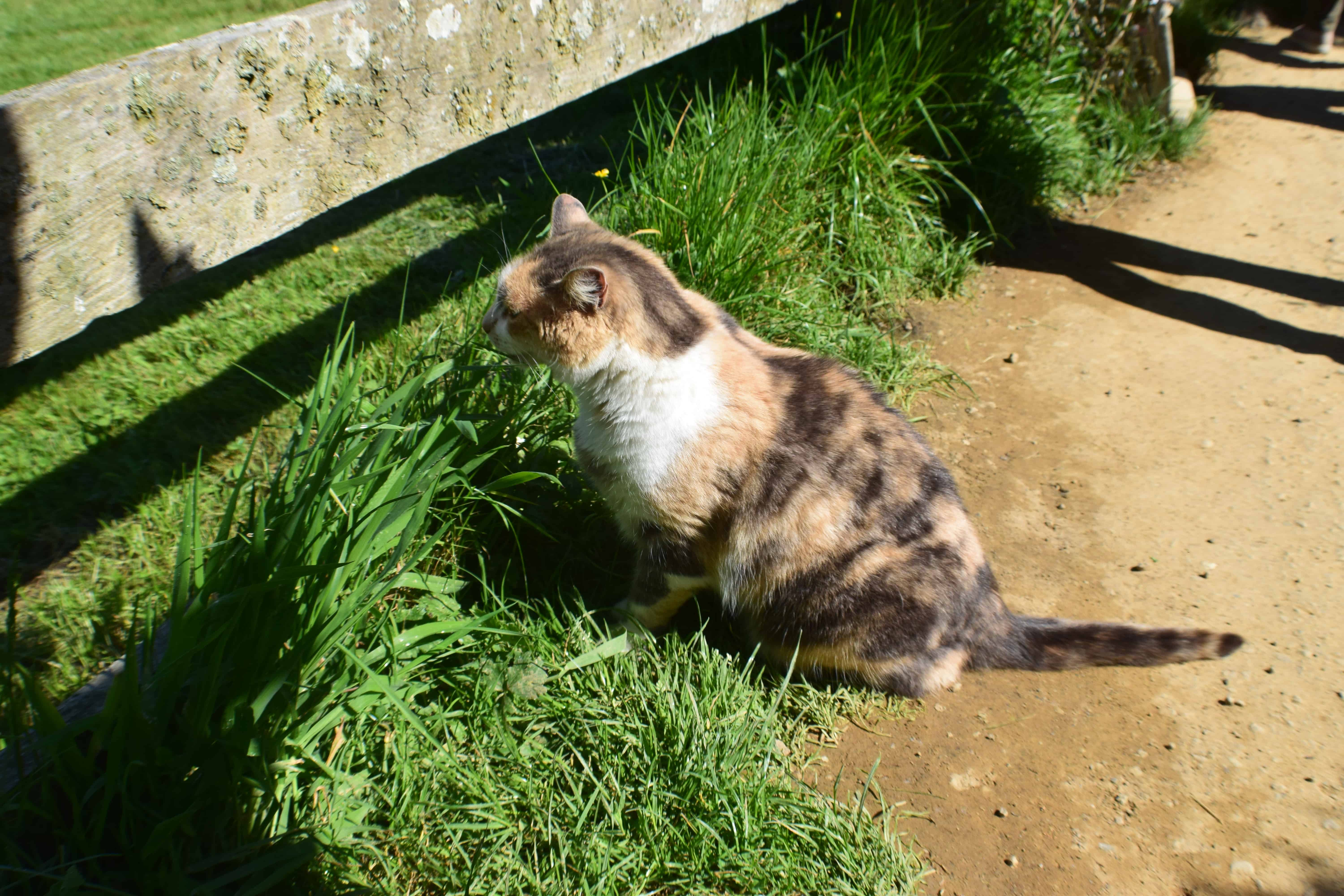 A cat looking under a fence at Hobbiton